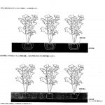 たかやが目指す区内の緑量増加計画(地下の自然樹形)